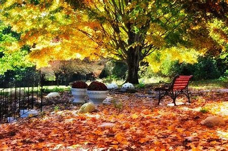 Time to Prepare Your Yard for Fall & Winter!