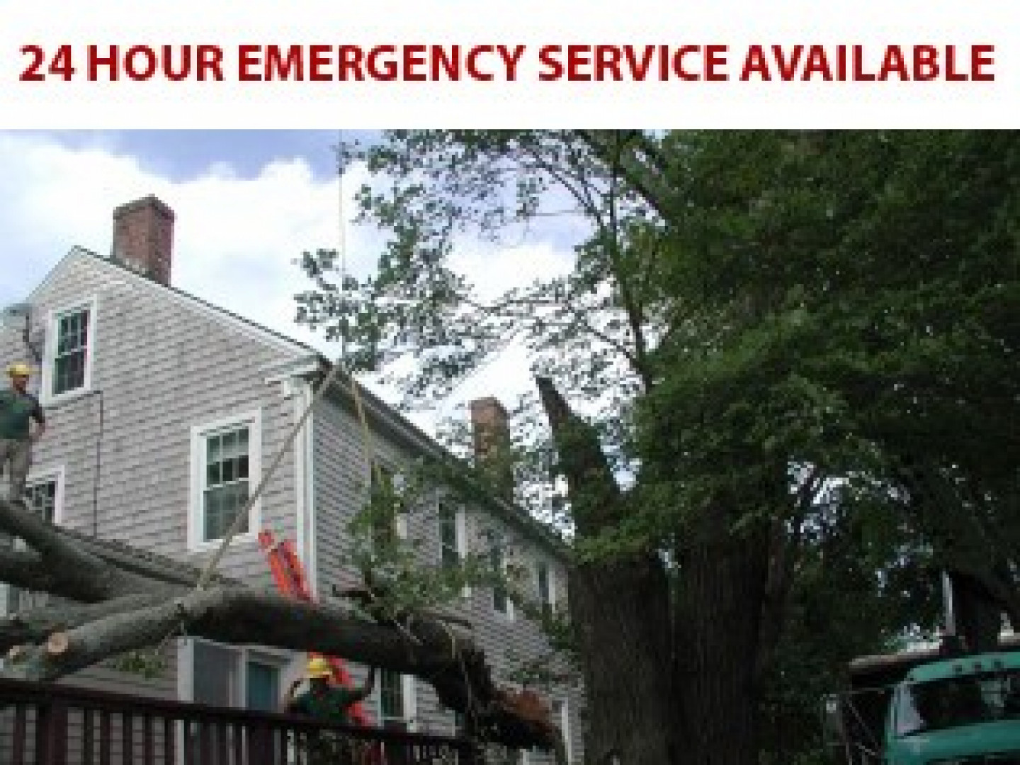 tree removal new bedford ma