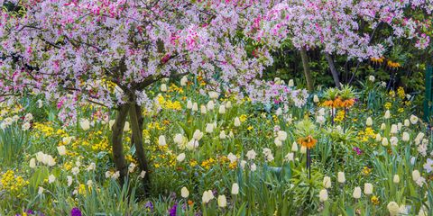 Time to Think About Spring & Summer Projects for Your Trees and Landscape